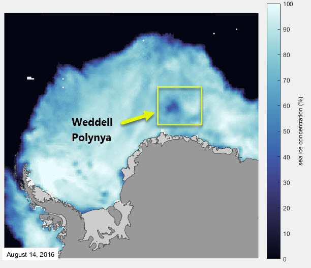 The Weddell Polynya as observed on 14 August 2016 in passive satellite data.