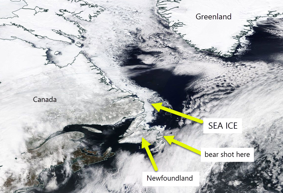 Sea ice off Newfoundland 19 April 2017.